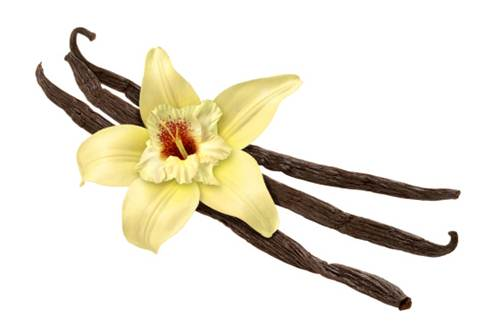 bacche-di-vaniglia